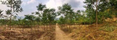 ที่ดิน 950000 กาญจนบุรี ไทรโยค ลุ่มสุ่ม